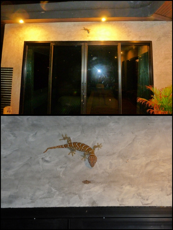 "E essa lagartixona?!?!?! O nome é Gecko por que ela faz um barulho que parece que ela fala ""Ge-cko"". Medo!! What about this massive lizard?!?!?! The name is Gecko because it makes a  sound that sounds ""Ge-cko"". Scary!!"