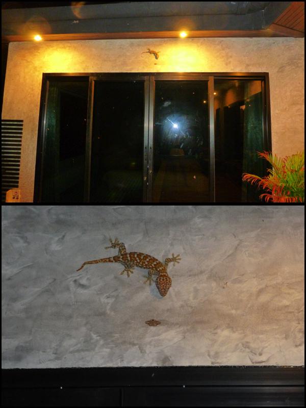 """E essa lagartixona?!?!?! O nome é Gecko por que ela faz um barulho que parece que ela fala """"Ge-cko"""". Medo!! What about this massive lizard?!?!?! The name is Gecko because it makes a  sound that sounds """"Ge-cko"""". Scary!!"""